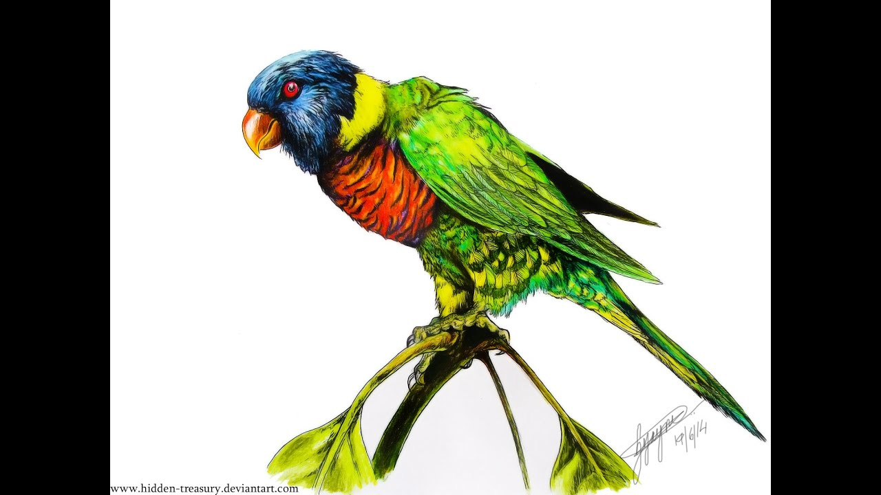 Line Drawing Rainbow : Rainbow lorikeet tattoo speed drawing youtube
