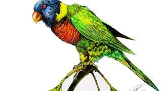 Rainbow Lorikeet Tattoo Speed Drawing