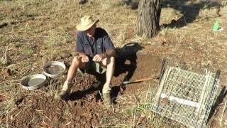 Fossicking for Moonstone , Queensland Australia.
