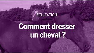 Comment fait-on pour dresser un cheval ?