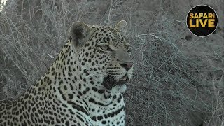 safariLIVE - Sunset Safari - November 30, 2018