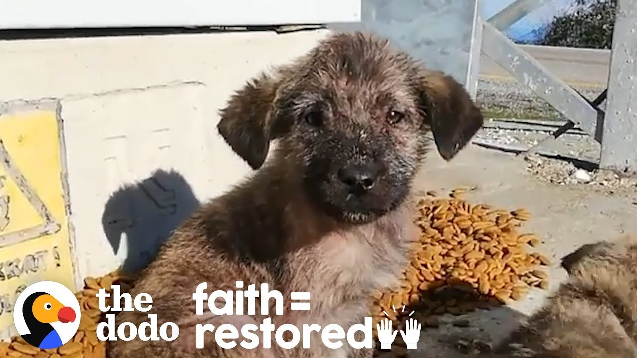 Turkish Girl Gives Up Everything to Save Stray Dogs | The Dodo Faith = Restored