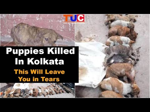 Puppies Killed In Kolkata : Stand Against Animal Cruelty : TUC