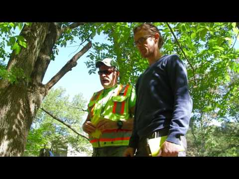 Water Science Careers: Watershed Management