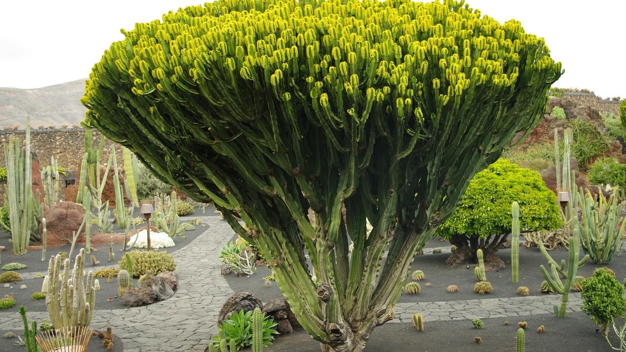 Fotos de islas canarias lanzarote el jard n de los for Fotos de cactus