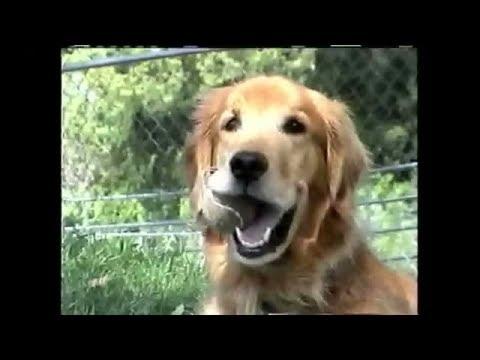 FUNNY AMAZING DOG VIDEO: ULTIMATE BALL-PLAY – NEW !!