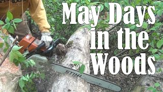 May Days in the Woods