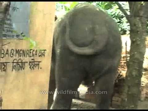 Elephant attacks vil