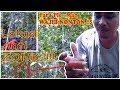 Para Pleman Wajib Nonton Vlog  Jalansabtu  Mp3 - Mp4 Download