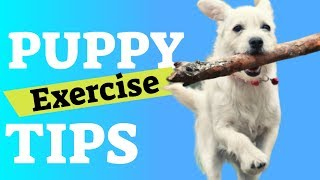 Puppy Exercise - Tips to Tire Out a Puppy