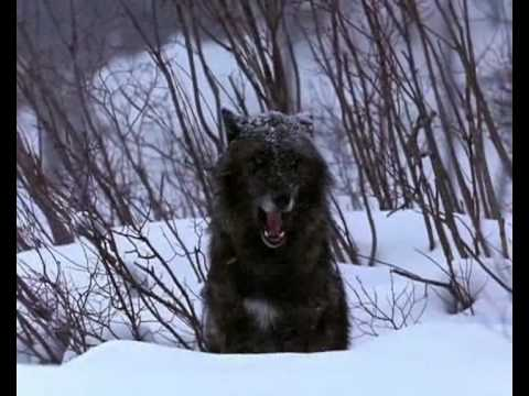 Vangelis - La Petite fille de la Mer (Living with Wolves)