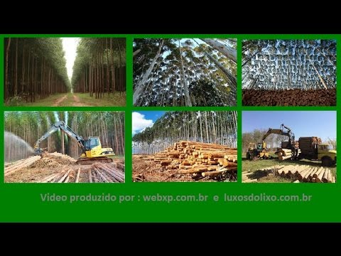 1 Hectare de Eucalipto Produz Quantos Metros Cúbicos de Madeira