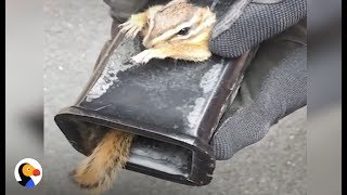 SCARED Chipmunk Stuck in Truck Hitch Rescued by Patient Guy | The Dodo