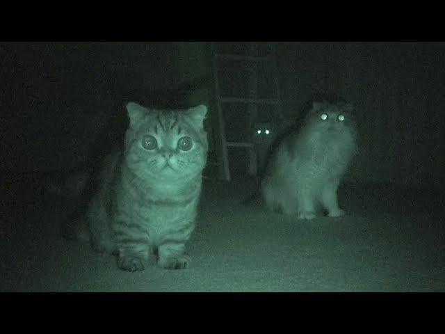 消灯後に本性を現す猫たち (日本語字幕)