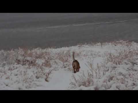 Снежная зима в Волгограде