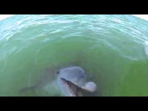 Dolphin Tour By Woody S In Port Aransas Tx Youtube