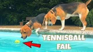 FUnny DogS Pool PartY : Funny Dogs Louie and Marie