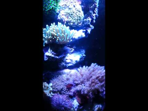 nano-reef-vase