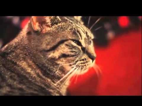 Collective Soul Dubstep Cat