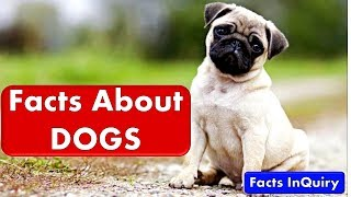 10 Facts About Dogs - Amazing Dogs Facts Which You Probably Didn't Know - Facts Inquiry