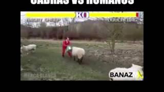 Lupte cu animale faze comice :)))