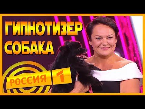 СОБАКА-ГИПНОТИЗЁР НА РОССИЯ 1 [БОМБ ИТ #3]