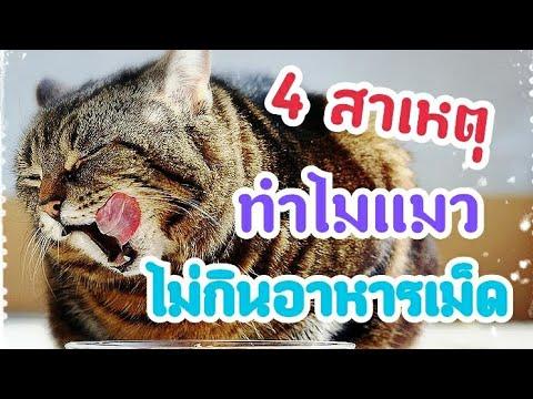 4 สาเหตุที่แมวไม่ยอมกินอาหารเม็ด | Cat story |