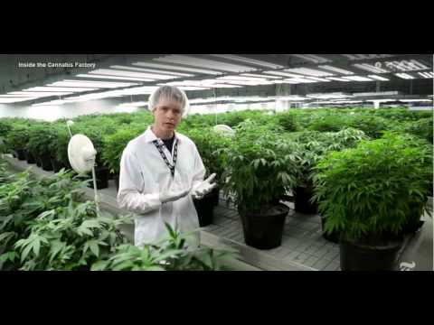 Inside the Tweed Marijuana Factory