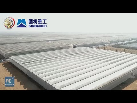China's greenhouse technologies turn Egypt's desert green