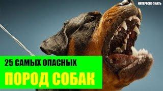 ТОП-25 Самых опасных пород собак