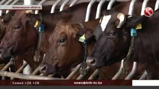 казахстанцев напугали историями про известь и гипс в молоке