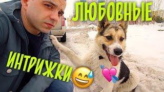 Love story у собак дворняжек. Тузик и Биля.