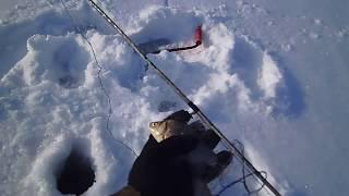 Ловля на косынки зимой с сигнализатором