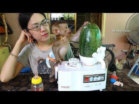 Dodo Very Surprise!! Daddy Make Watermelon Juice For Dodo, Dodo Like Juice