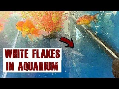 How To: Fix Mysterious White Flakes In Aquarium