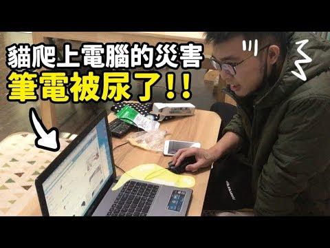 【貓爬上電腦的災害,筆電被尿了!!】志銘與狸貓