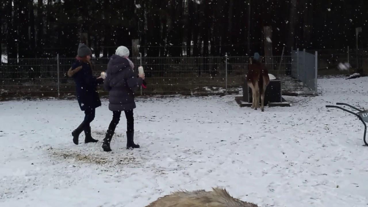 Frostsichere Tränke auf der Eselwiese - YouTube
