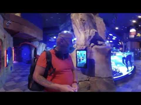Дубаи360/Путевые Заметки – Dubai Aquarium & Underwater Zoo в режиме 360, часть 2 – подводный зоопарк