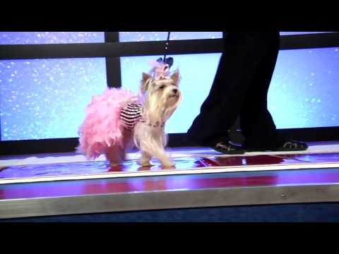 Stacy Pet Design Fashion Show