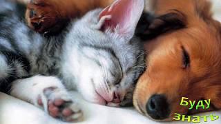 Легко убрать ШЕРСТЬ Животных на ковре, диване