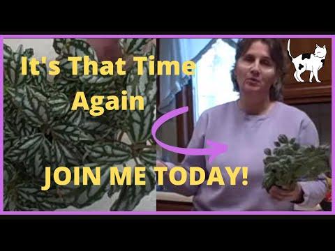 low light houseplant pilea how to propagation u003d free plants - Houseplants For Low Light