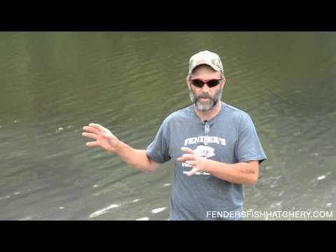 Vegetation Control - Different Methods To Control Pond Vegetation