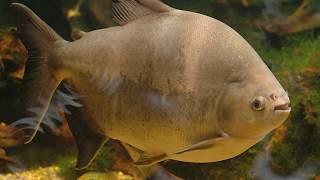 दुनियाँ की सबसे खतरनाक मछलियाँ   Dangerous fish in the World