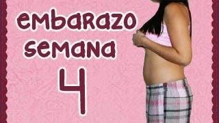 SEMANA 4 DE EMBARAZO (1 mes de embarazo con 5 semanas de embarazo)