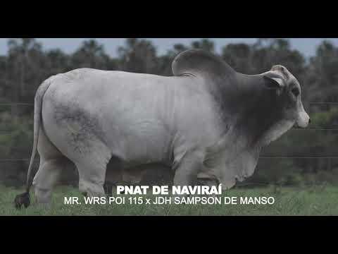LOTE 17 - PNAT DE NAVIRAÍ