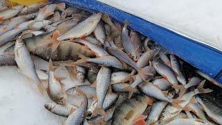 Клёвая рыбалка на озере Инголь