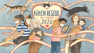 12th Annual Kitten Rescue Fur Ball