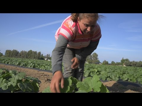 Surviving the Drought in California: Farm Workers Struggle to Put Food on the Table