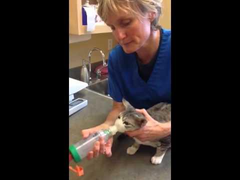 aerokat feline inhaler demo youtube