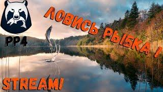 Русская Рыбалка 4 СТРИМ в погоне за рыбой